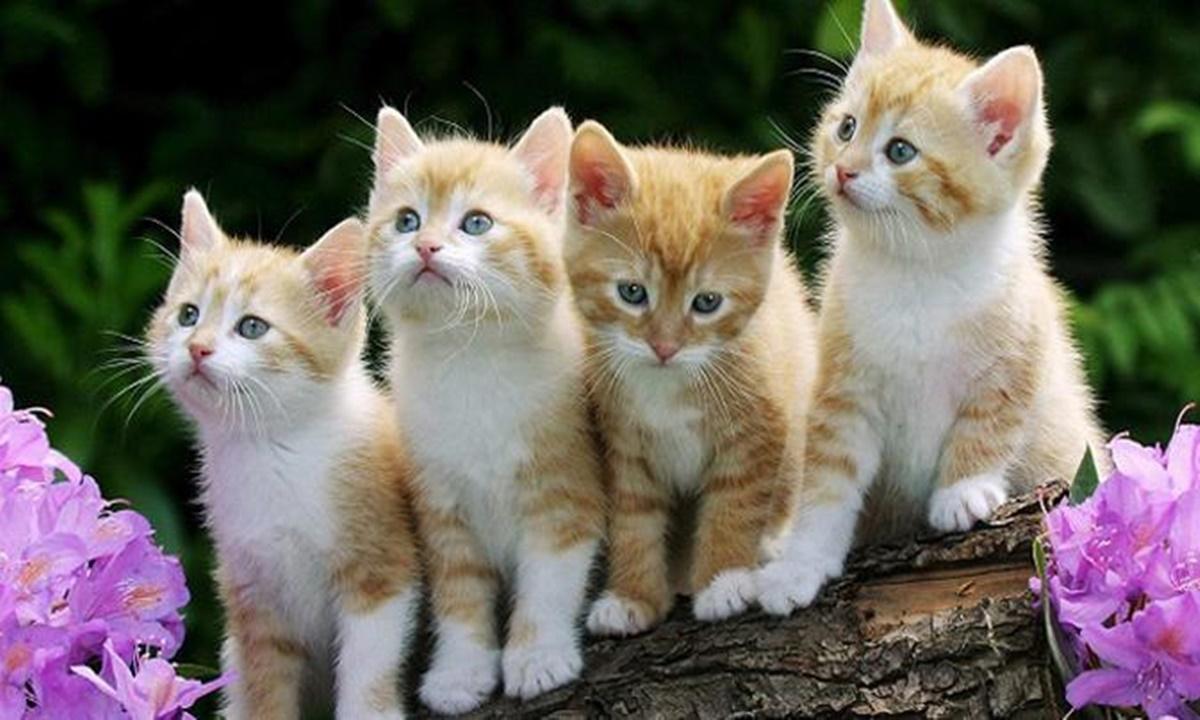 Alasan Kucing Menjadi Peliharaan Favorit