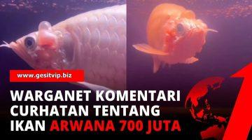 Viral Ikan Arwana Platinum Seharga Rp 700 Juta Mati